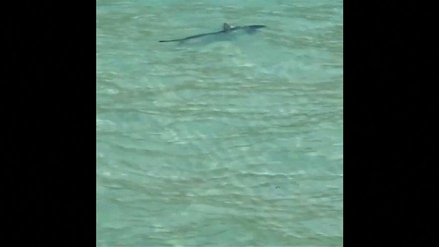 Tubarão avistado em Maiorca obriga a evacuação de praia