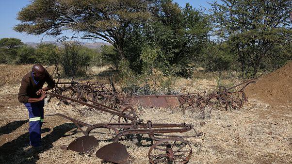 Güney Afrika'da bir çiftçi eski tarım malzemeleriyle
