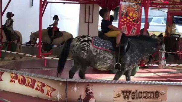Video: Karussell mit lebenden Ponys sorgt für heftige Kritik im Internet