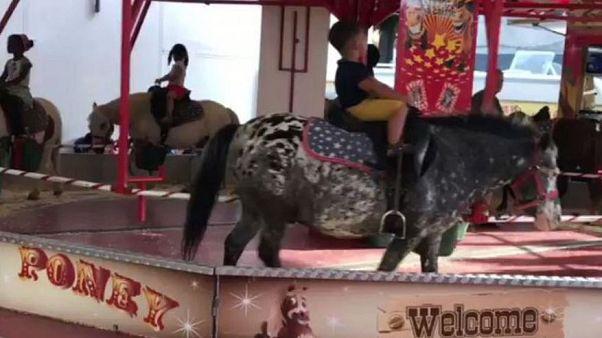 VIDEO - Polemiche a Bruxelles per un carosello con pony veri