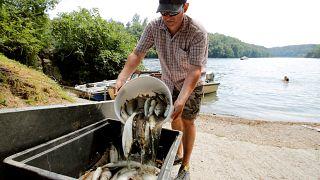 Acqua troppo calda, moria di pesci nel Reno
