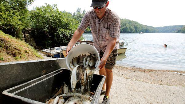 Onda de calor mata peixes do Rio Reno