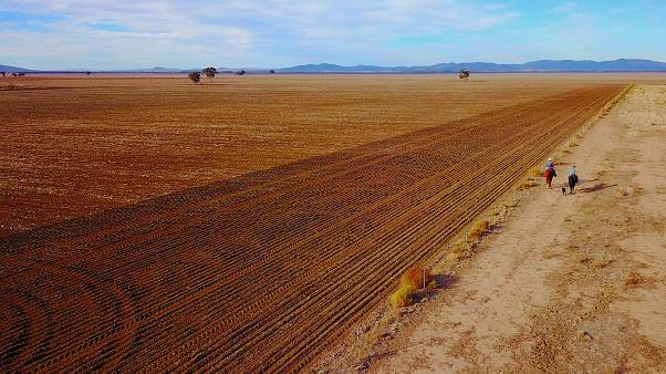 Australian farm output hit by drought