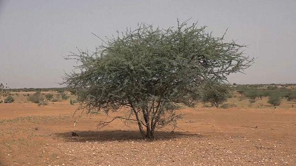 Gefährliches Mali: deutsche Soldaten auf UN-Friedensmission