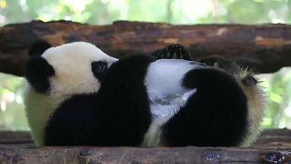 Dias de calor num zoo de Xangai