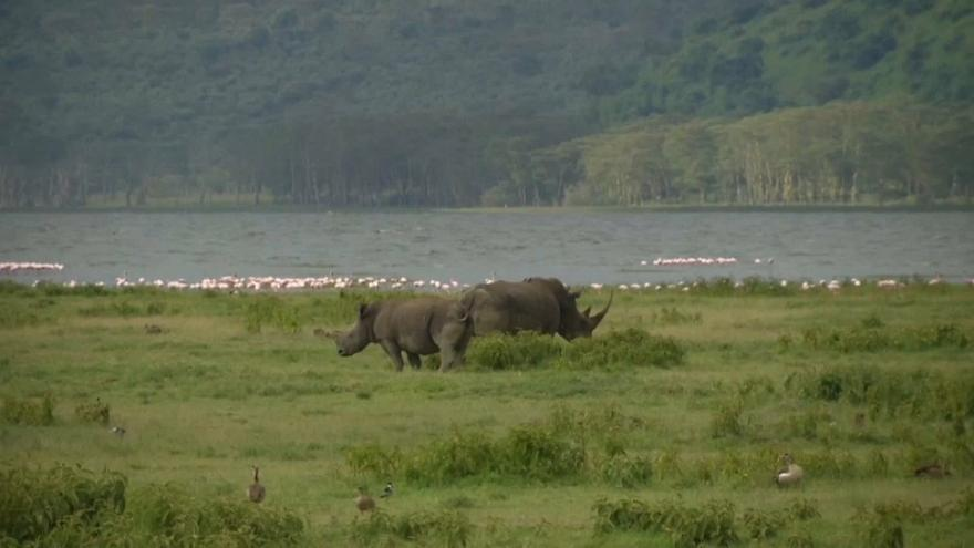 Mueren los 11 rinocerontes negros trasladados para su conservación