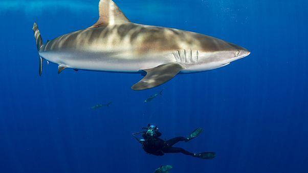 Kell-e félni a cápáktól?