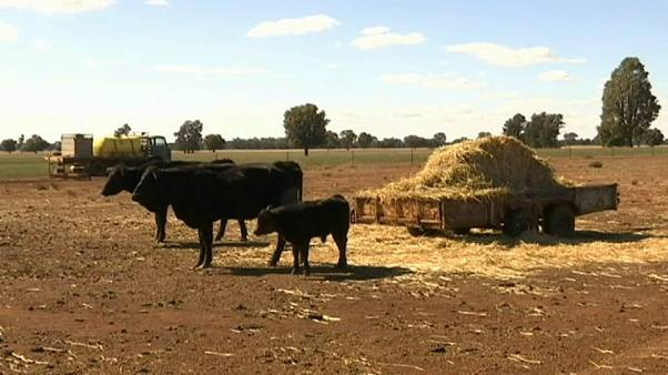 Eastern Australia hit by worst drought in living memory