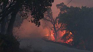 Portekiz ve İspanya'daki yangınlarda binlerce hektarlık yeşil alan kül oldu