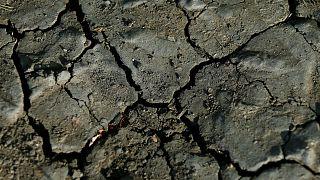 Heat, hardship and horrible harvests: Europe's drought explained