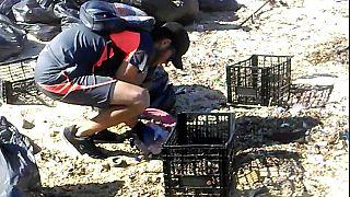 Puszta kézzel gyűjtik a szemetet a mexikói partoknál