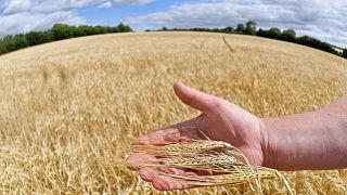 Aşırı sıcaklıkların Avrupa'da gıda fiyatlarını yükseltmesi bekleniyor