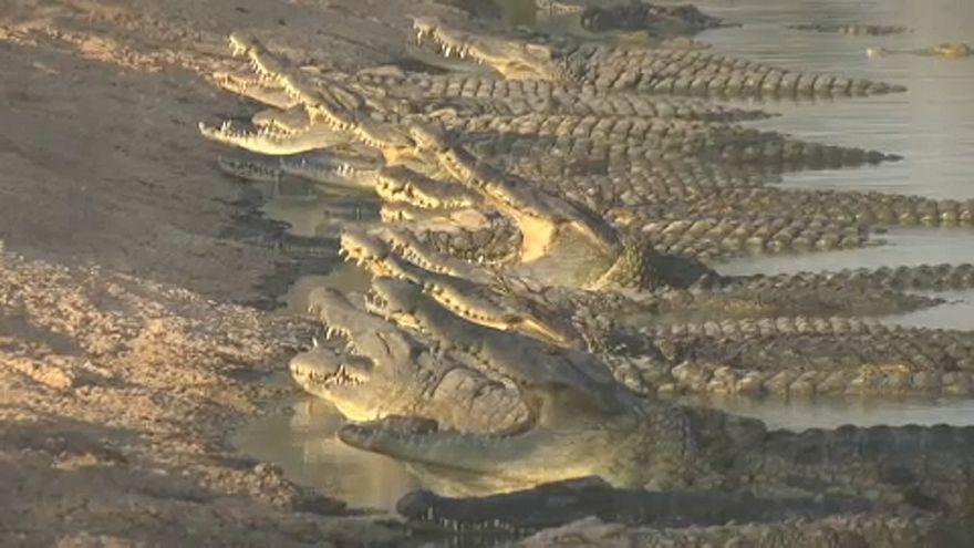 Krokodile im juristischen Niemandsland
