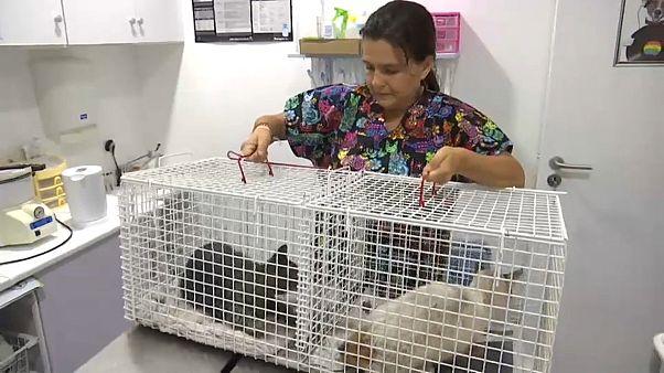 Veterinários resgatam animais afetados pelo incêndio no Algarve