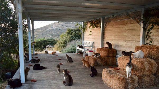 Πιάσε δουλειά στη Σύρο φροντίζοντας 55 γάτες!
