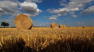 Γερμανία: Αποζημιώσεις λόγω ξηρασίας διεκδικούν οι αγρότες