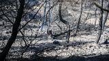 Εύβοια: Αυξημένη επιφυλακή των πυροσβεστικών δυνάμεων