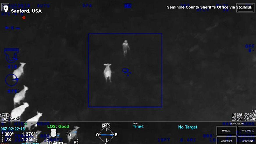 Vídeo: un rebaño de vacas ayuda a detener a un sospechoso