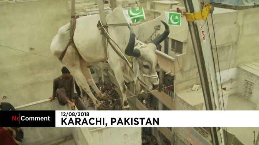 Festa do Sacrifício no Paquistão