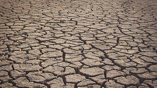 Засуха и катастрофически низкий урожай: что принесла Европе летняя жара?