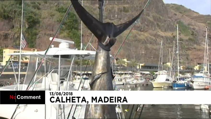 صياد أمريكي يصطاد سمكة مارلن وزنها 366 كلغ