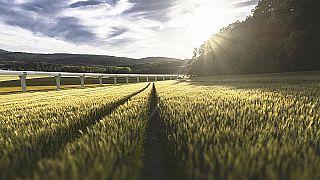 Tren del futuro se instala en el campo francés