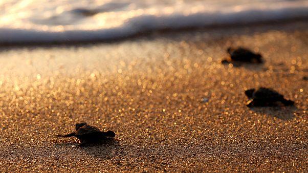 H Κύπρος «έσωσε» τις θαλάσσιες χελώνες