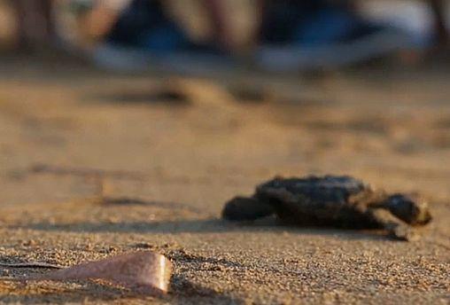 افزایش تخمگذاری لاکپشتها در سواحل قبرس