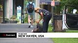 Decenas de personas con sobredosis en un parque de Connecticut