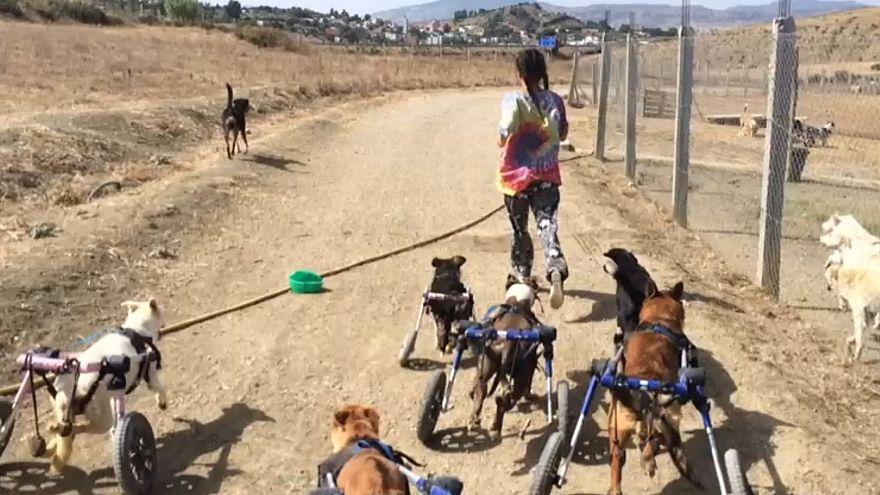 Марокканка спасает бродячих собак