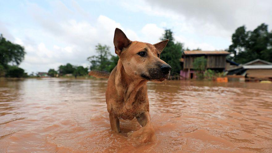 Minden kutyát megmentene - és meg is teszi