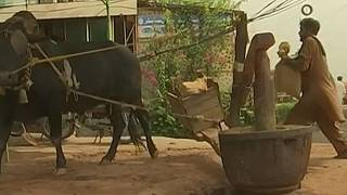 Watch: Millers uses traditional methods to make edible oil
