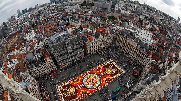 Watch: Brussel's Grand Place square covered with colourful flowers