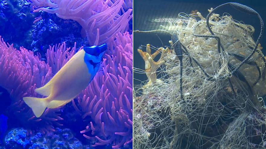 Zoo dumps plastic waste in aquarium to highlight ocean pollution problem