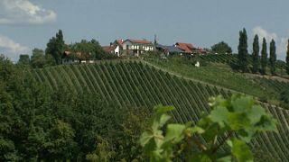 Снайперы в виноградниках