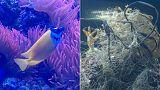 Hayvanat bahçesi akvaryumu plastik atıkla doldurdu