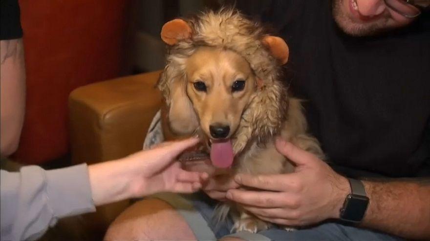 Dakhund köpekleri için Londra'da özel kafe açıldı