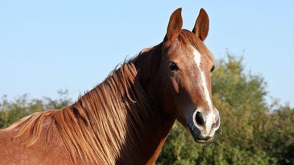في أمريكا.. حصان يقاضي صاحبته ويربح الدعوى