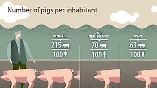 No, there are not more pigs than people in Spain