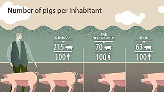 No, España no tiene más cerdos que habitantes