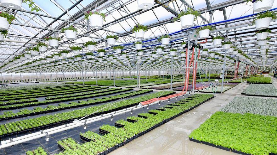 ABD'den 270 kat küçük Hollanda dünyanın en büyük 2. tarım ihracatçısı