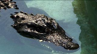 83 Jahre alt: Kroko-Greis im Belgrader Zoo