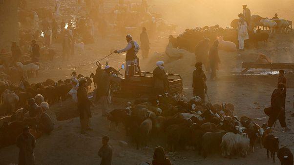 Kabil'de kurbanlık pazarı