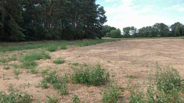 Drought-hit German farmers demand 1 billion euro aid package