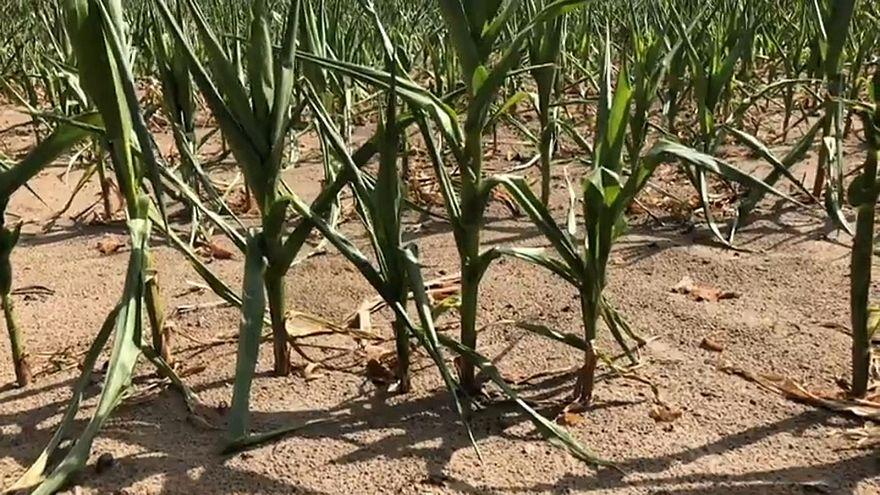 Dürre: 340 Millionen Euro für deutsche Bauern