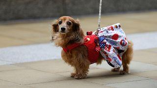 Las tiendas de mascotas tendrán prohibido vender cachorros y gatitos en Reino Unido