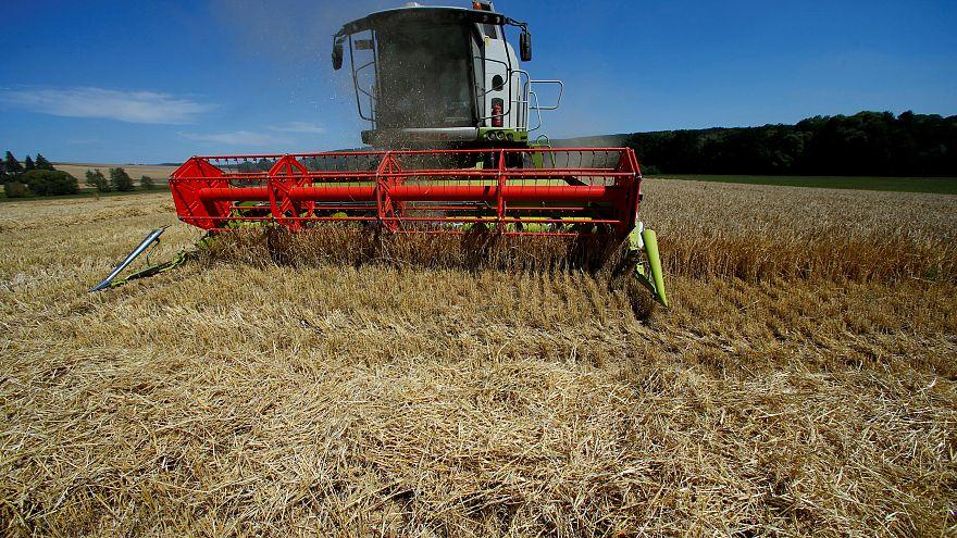 Dürreschäden: Bund will Bauern mit 150 Millionen Euro helfen