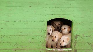 La premier May contro il business dei cuccioli