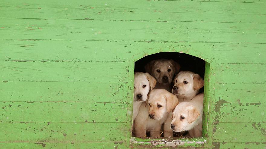 Sale of puppies and kittens by pet shops set to be banned in England