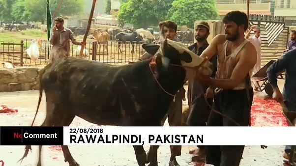 Watch: Muslims in Pakistan celebrate Eid al-Adha